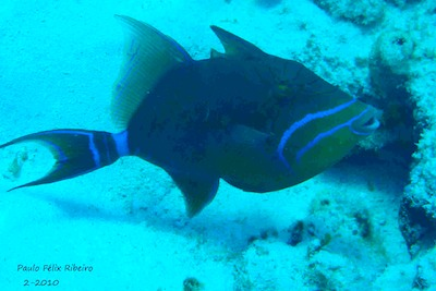 picture by Paulo Felix Ribeiro of diving with Scuba Libre, Playa del Carmen