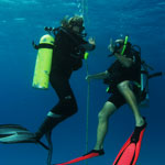 picture of Discover Scuba Diving experience