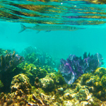 picture of Cozumel snorkeling with Scuba Libre
